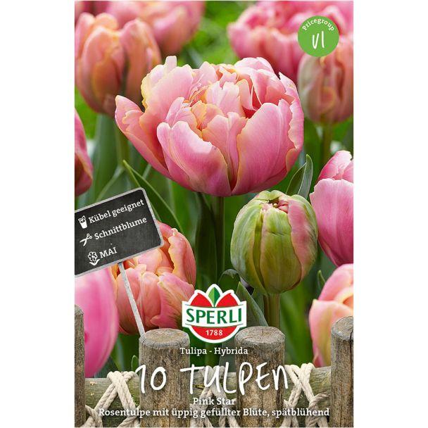 Gefüllte, späte Tulpen 'Pink Star'