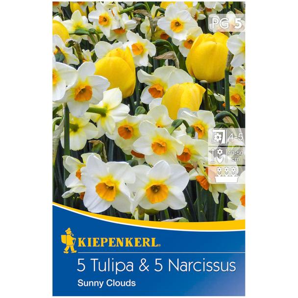 Tulipa und Narcissus-Mix Sunny Clouds