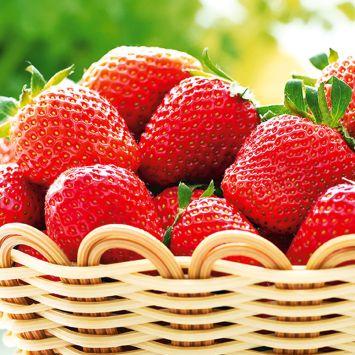 Erdbeere 'Lambada®', Frühsorte als Setzlinge