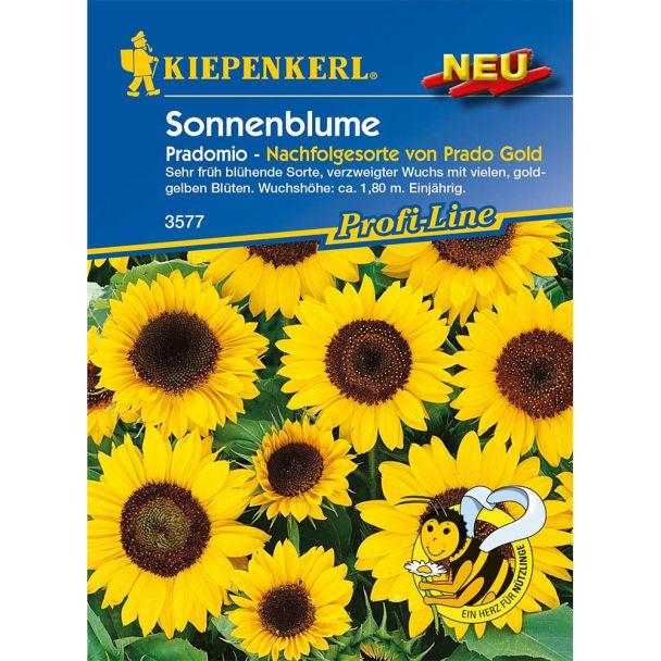 Sonnenblume Pradomio