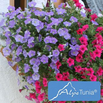 AlpeTunia® Light Blue