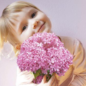 Hortensie 'Magical® Pinkerbelle'