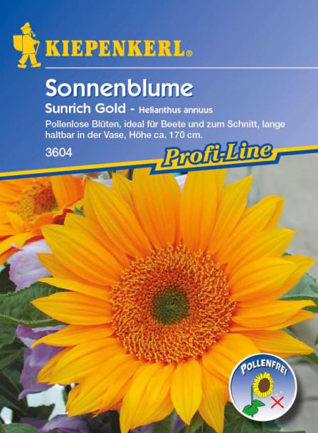 Sonnenblume 'Sunrich Gold'