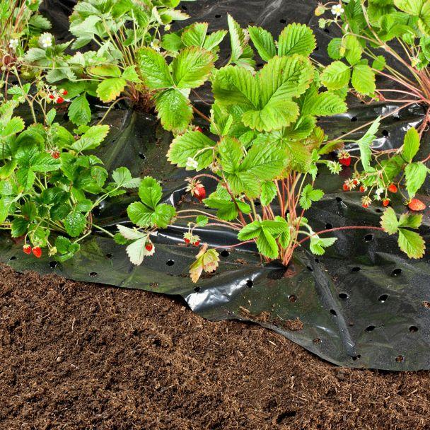 Erdbeer-Folie 1,5x10m