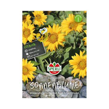 Sonnenblume 'Santa Lucia'