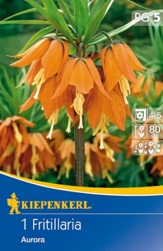 Kaiserkrone 'Aurora' , orange