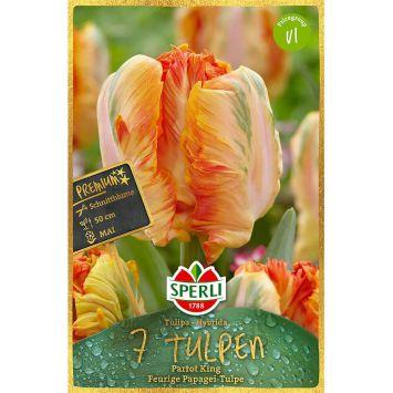 Sperli Premium Tulpen Parrot King