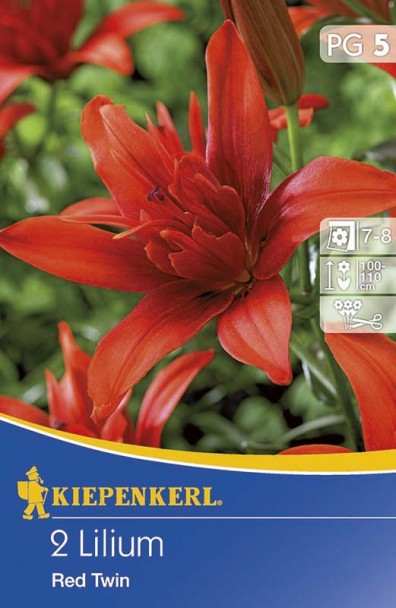 Lilien 'Red Twin'