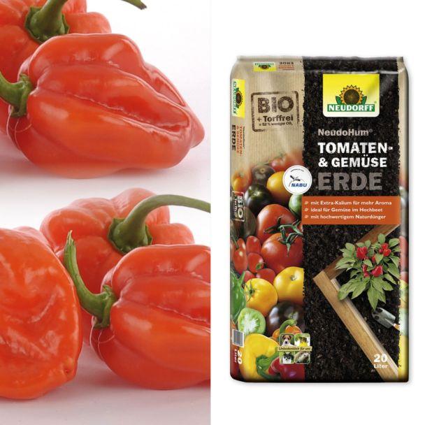 Setpreis: Indian Fire – Indischer Chili + 1 x NeudoHum® Tomaten- und Gemüseerde