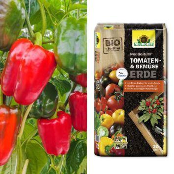 Sparangebot: 2 x 'PusztaTraum' F1 - Gemüse-Paprika + 1 x Erde