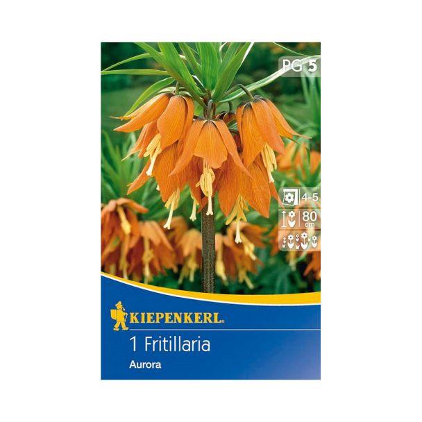 Kaiserkrone 'Aurora' , orange