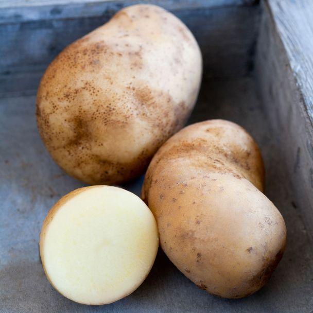 Topf-Kartoffel 'Sarpo Shona'