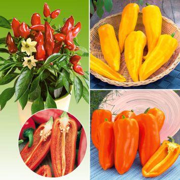 3 x Snack-Paprika 'Ariella®'