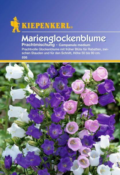 Marienglockenblume 'Prachtmischung'