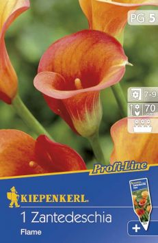 Calla 'Flame', Orange