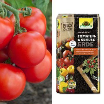 Freiland-Tomate 'GartenMeister' F1 + NeudoHum® Tomaten- und Gemüseerde (Sparangebot)