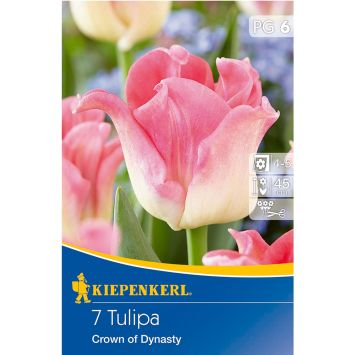 Tulipa Crown of Dynasty