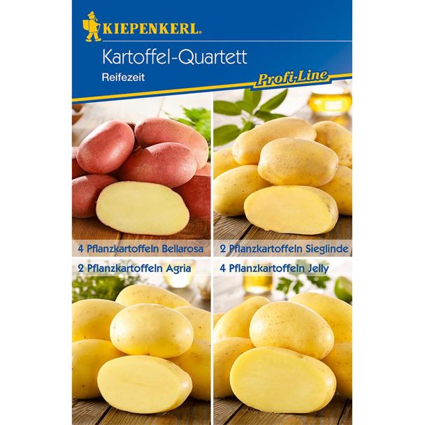 Kiepenkerl Kartoffel Quartett 'Reifezeit': Bellarosa, Sieglinde, Agria, Jelly