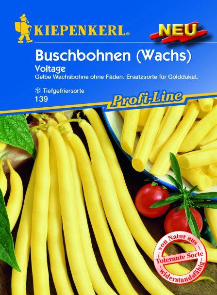 Buschbohne Voltage (gelbhülsig)