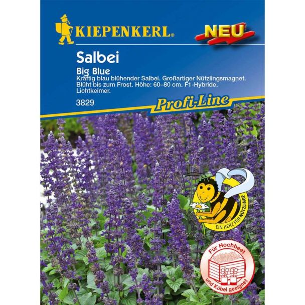 Salbei 'Big Blue' F1