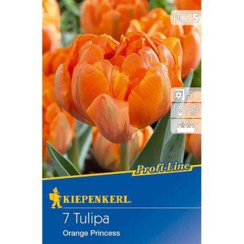 Gefüllte späte Tulpe `Orange Princess` - Blumenzwiebel