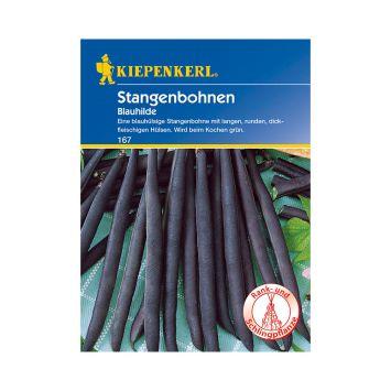 Stangenbohnen 'Blauhilde'