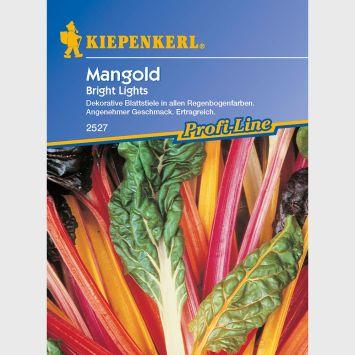 Mangold 'Bright Lights'