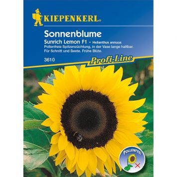 Sonnenblume 'Sunrich Lemon' F1