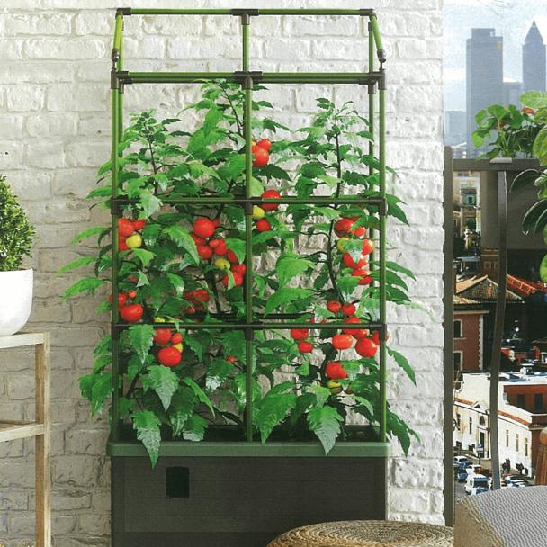 Bio Green 'City Jungle' - Minigarten mit Rankgitter