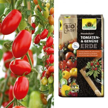 Sparangebot: 2 x 'Marzino' F1 - Mini-Roma-Tomate + 1 x NeudoHum® Tomaten- und Gemüseerde, 20 Liter