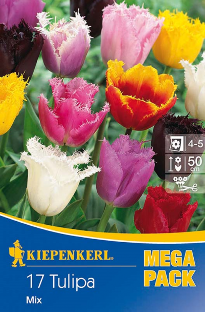 Tulpen 'Gerfranste Tulpen' - Mischung
