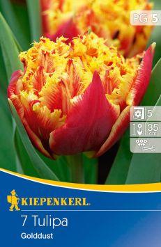 Sperli Premium Tulipa Gold Dust