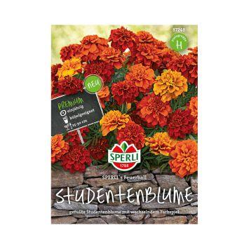 Studentenblume 'SPERLI's Feuerball'