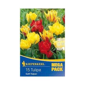 Duft-Tulpenmischung 'Duftende Frühlingsgrüße'