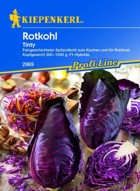 Rotkohl 'Tinty' - Spitzrotkohl, F1