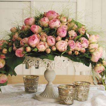 'Lovely-Rokoko®' Rose