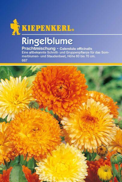 'Ringelblume' Prachtmischung