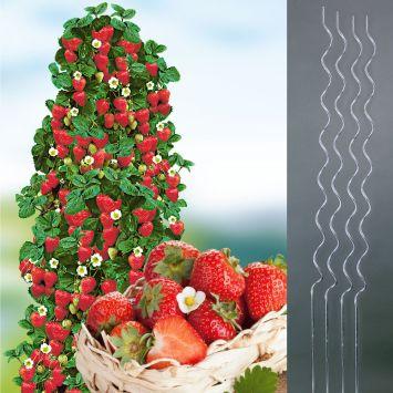 6 Kletter-Erdbeeren Hummi® + 4 Kletterspiralen