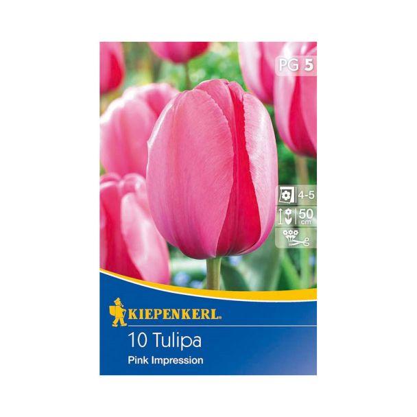 Tulpe `Pink Impression` - Blumenzwiebel