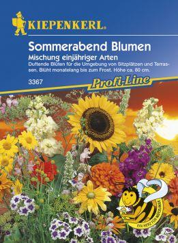 Sommerabend Blumen 'Mischung einjähriger Arten'