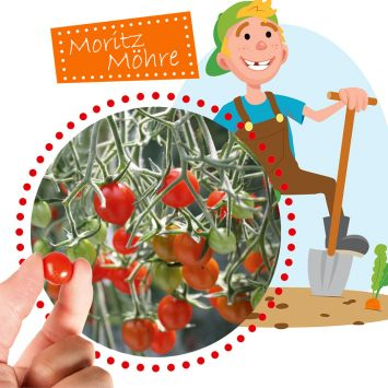 Mini-Tomate Rote Murmel Tomberry®
