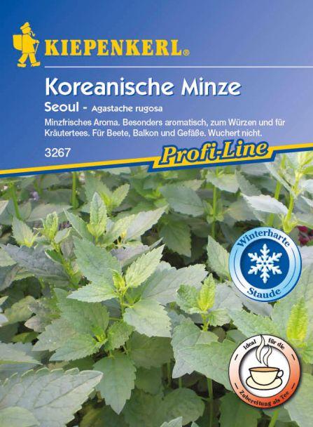 Koreanische Minze 'Seoul'