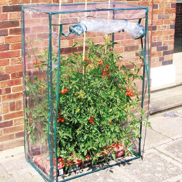 Tomaten-Gewächshaus