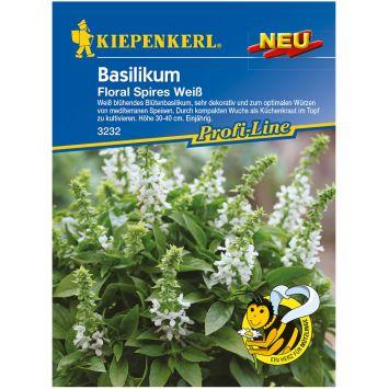 Blütenbasilikum 'Floral Spires Weiß'