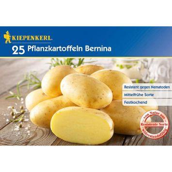 Pflanzkartoffeln Bernina, Mittelfrüh, 25 Knollen (ca. 2,5kg)