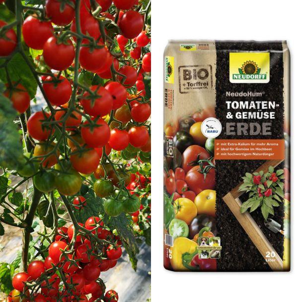 Cocktail-Tomaten 'Perlino' + Erde (Sparangebot)