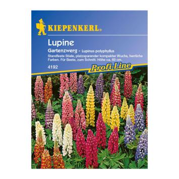 Lupine 'Gartenzwerg'