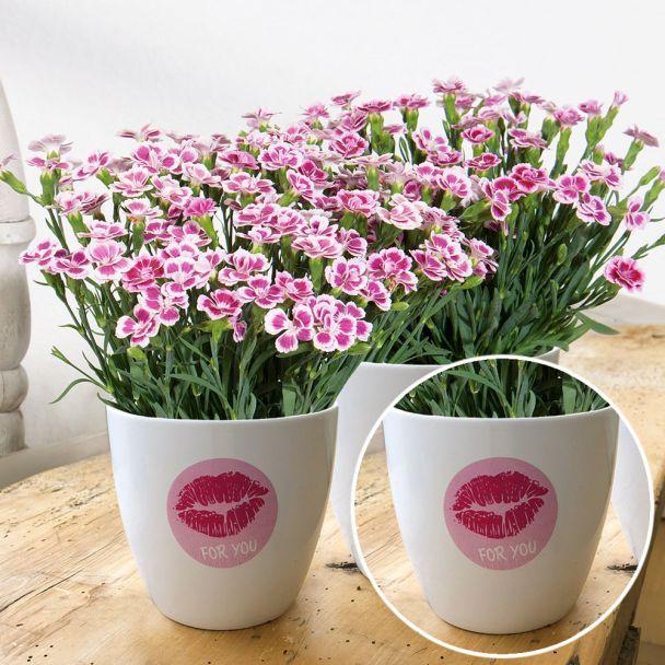 Übertopf Pink Kisses