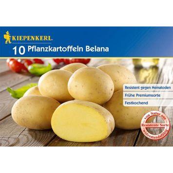 Pflanzkartoffeln Belana, Früh, 10 Knollen