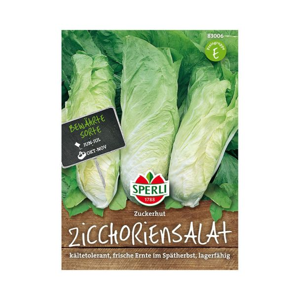 Zichoriensalat 'Zuckerhut'